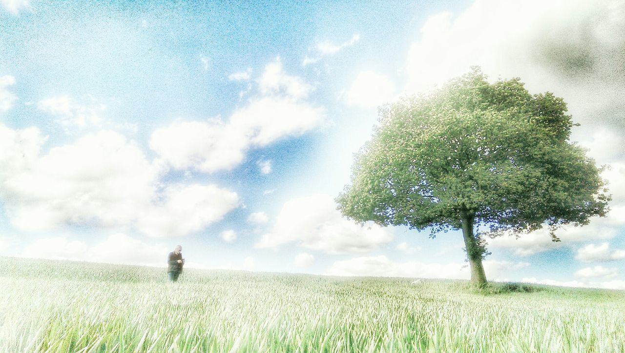 field, grass, growth, sky, nature, tree, landscape, agriculture, beauty in nature, tranquility, cloud - sky, day, outdoors, scenics, no people, rural scene
