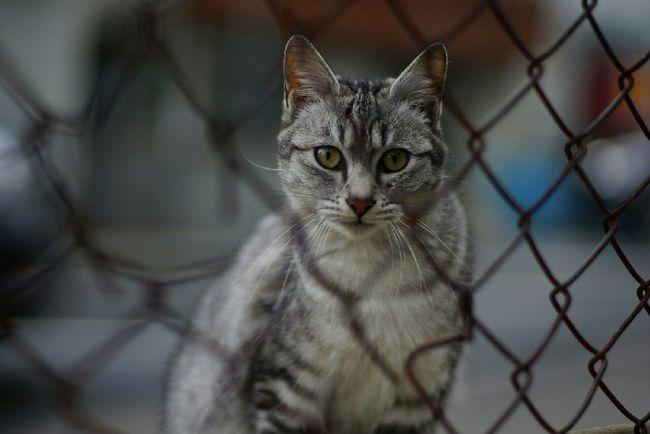 Stray Cat Nofilter 野良猫 EyeEm Cats