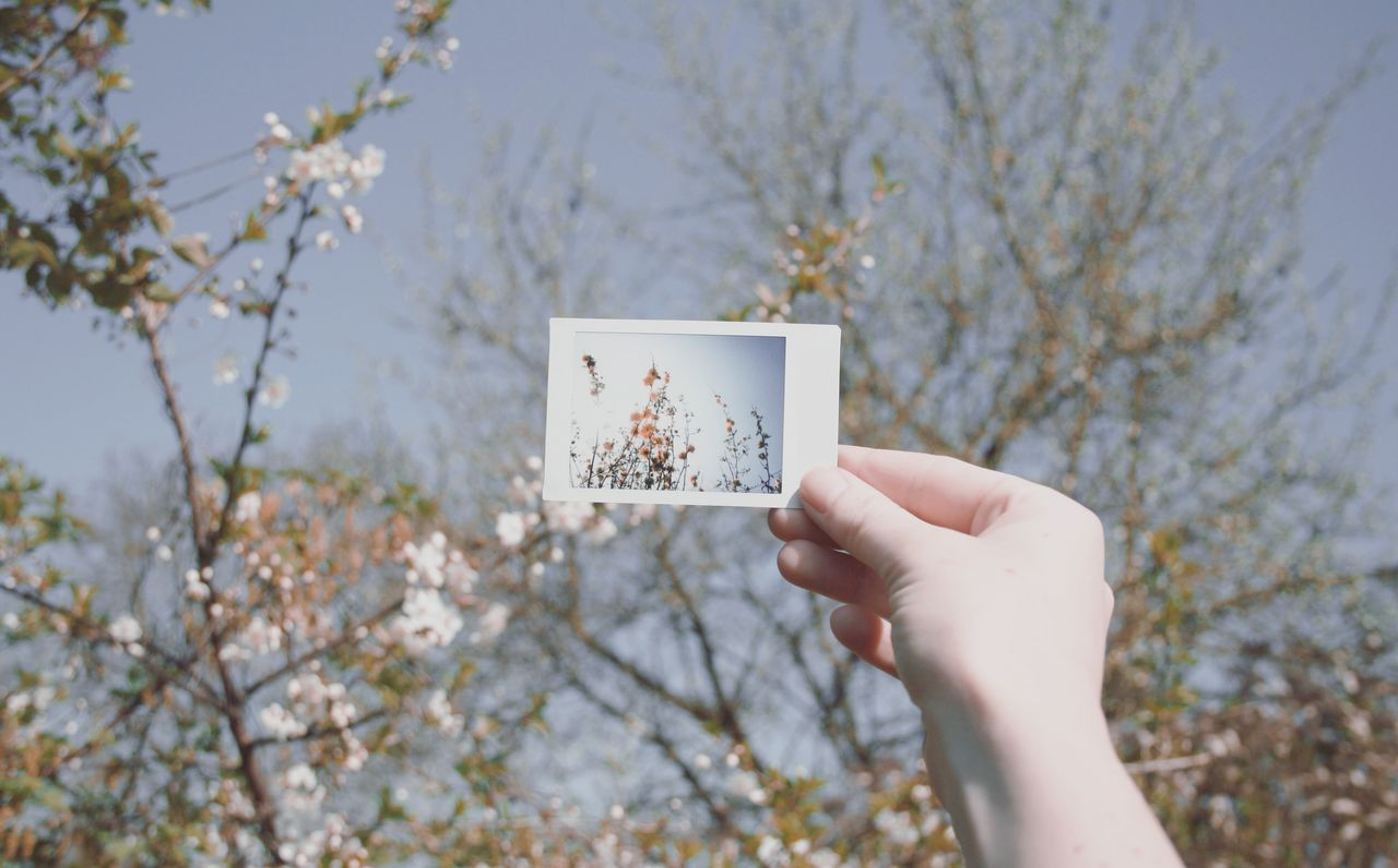 Good morning 🌷🌞. Nature Nature_collection Human Hand Sky Outdoors Flowers Blooming Spring Springtime Sunlight Polaroid Human Body Part Holding Adults Only People Simplicity Beauty In Nature Taking Photos Shootermag EyeEm Best Shots