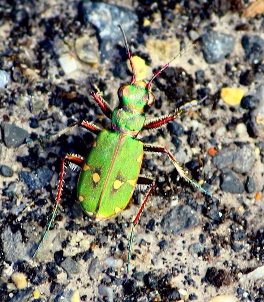 insect, animal themes, animals in the wild, one animal, high angle view, close-up, no people, leaf, day, outdoors, green color, animal wildlife, nature, full length, fragility