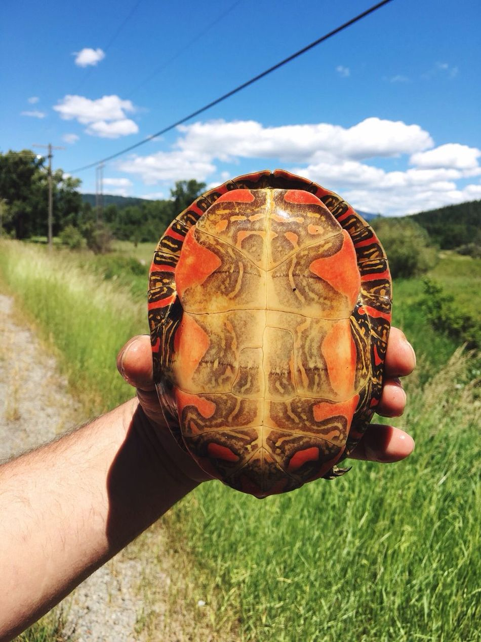 My Year My View Painted Turtle Holding Human Hand Outdoors Safety he was on the road, we moved him near the stream. Cloud - Sky Close-up Turtle
