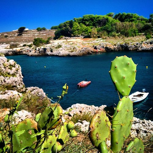 LOVES_LECCE Salento Mare Lecce natura nature sea italia italy puglia otranto paesaggio land landscape
