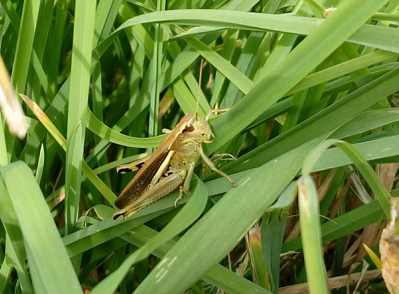 Close-Up Of An Insect On Grass