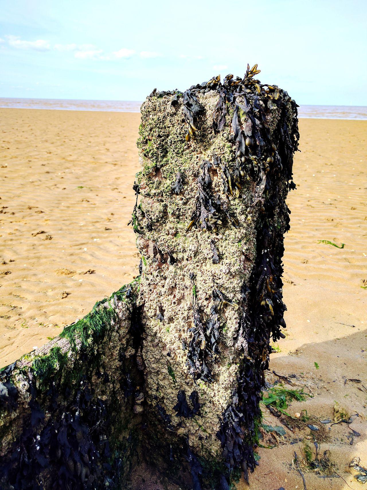 Beach Wood Beach Sea Sand Water Nature Day Outdoors Beauty In Nature Sky Horizon Over Water Shadow No People Seaweed Shells British Beaches