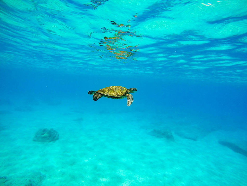 Beautiful stock photos of schildkröte,  Animal Themes,  Animals In The Wild,  Beauty In Nature,  Blue