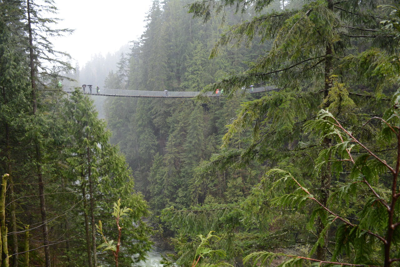 Beauty In Nature Capilano Suspension Bridge Day Evergreen Forest Freshness Green Color Green Color Growth Landscape Lush Foliage Nature Outdoors Rainy Day River Scenics Suspension Bridge Tranquil Scene Tranquility Tree Trees And Sky Up High Vancouver BC Water