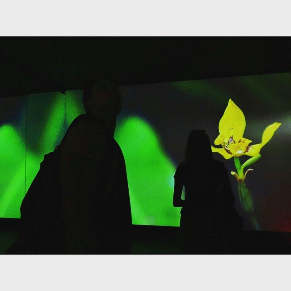 Expo - Padiglione Ecuador Expo Ecuador Milan Gitaromagnosi bellegite videoecuador instagood colorful dark expo2015