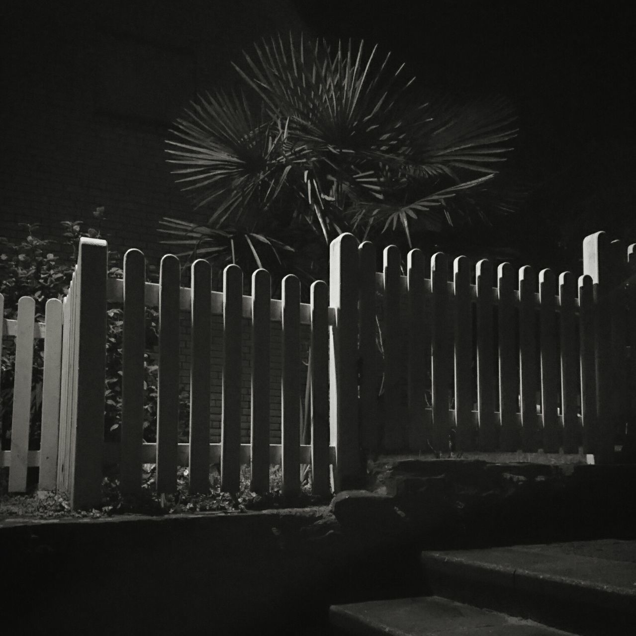 palm tree, no people, outdoors, night, nature