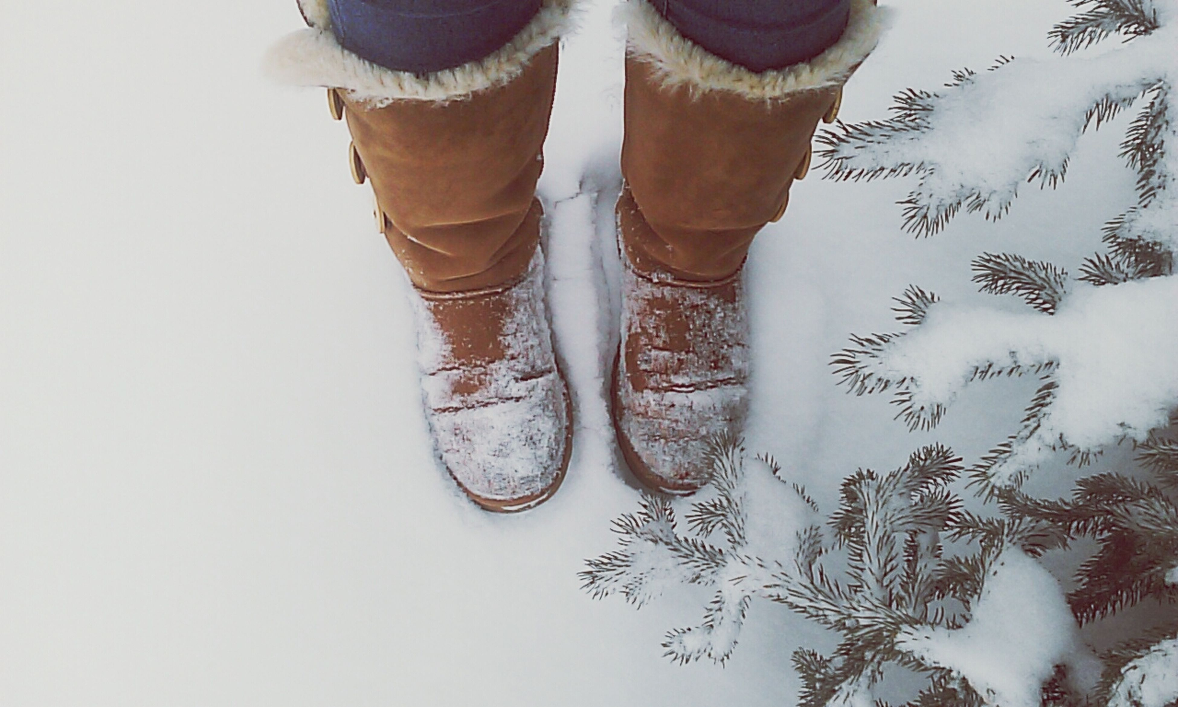 winter, shoe, snow, cold temperature, low section, covering, season, low angle view, day, high angle view, outdoors, close-up, frozen, nature, white color, part of, tree, person, weather, footwear