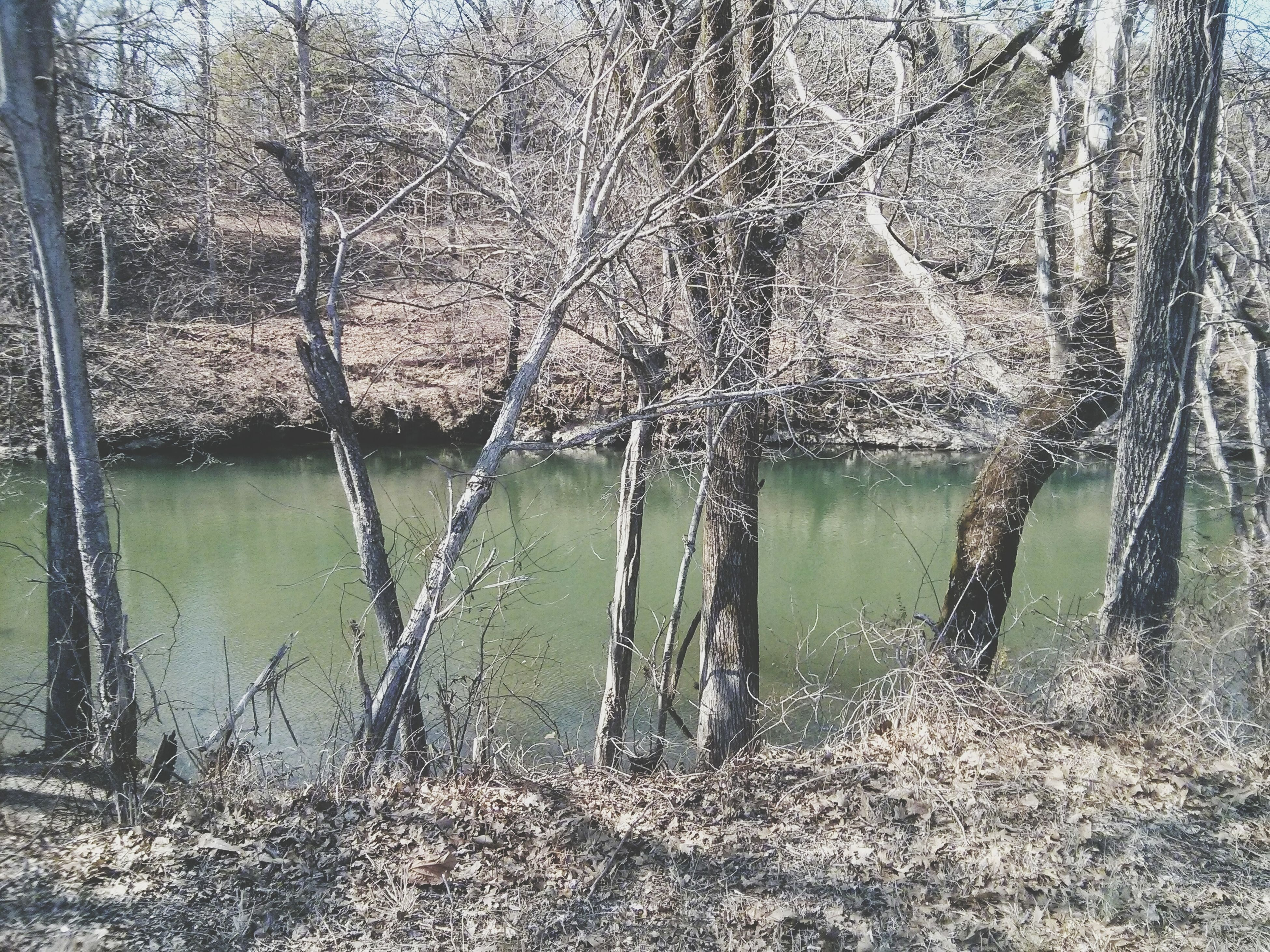 water, branch, tree, bare tree, tranquility, nature, lake, beauty in nature, growth, tranquil scene, tree trunk, reflection, plant, scenics, day, outdoors, river, no people, non-urban scene, idyllic