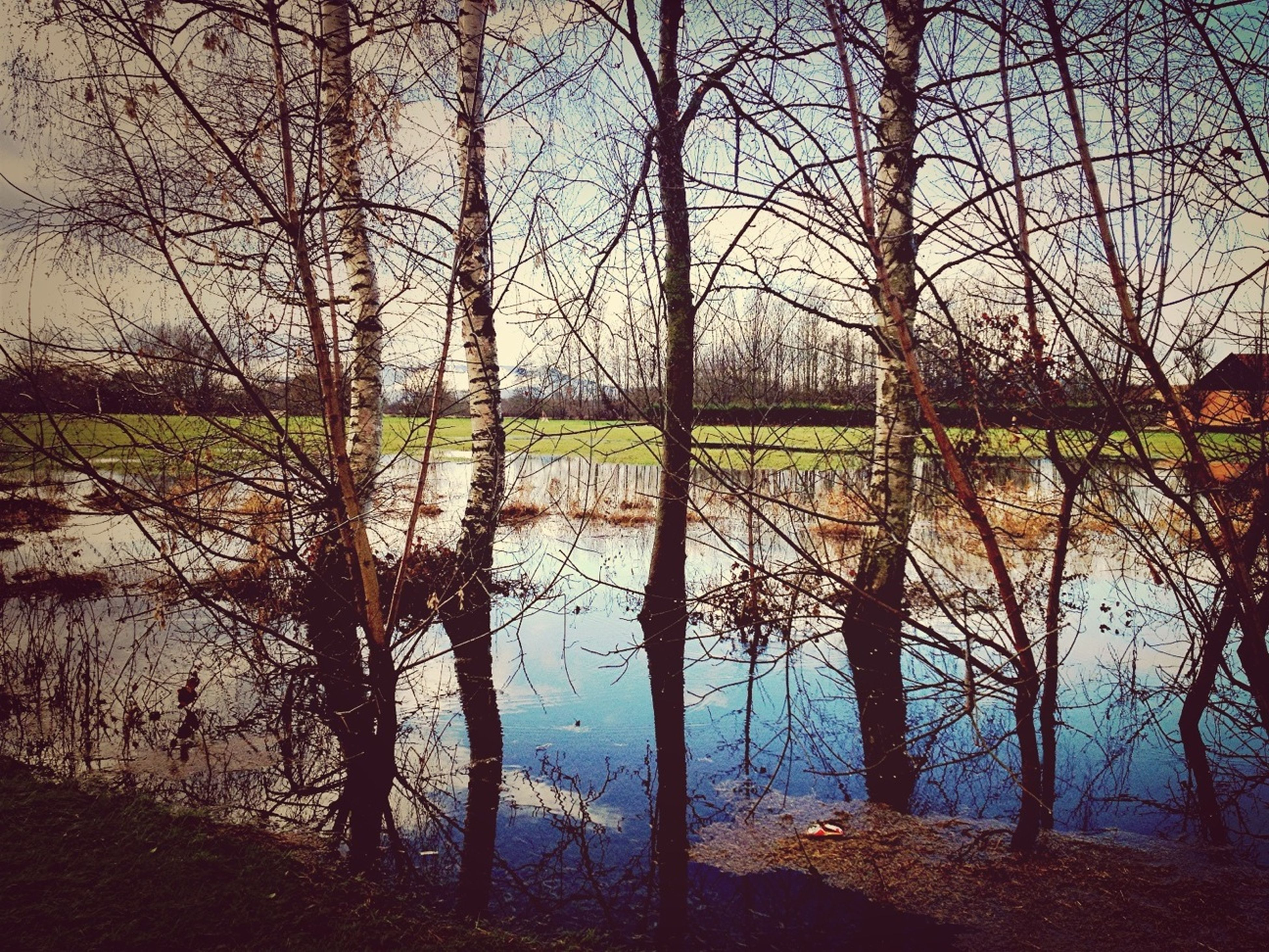 bare tree, tree, water, tranquility, tranquil scene, lake, branch, scenics, beauty in nature, nature, reflection, sky, river, landscape, growth, tree trunk, grass, field, idyllic, blue