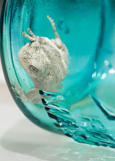 Blue First Eyeem Photo Freshness Frog Glass - Material Gray Frostbite Sea Summer Swimming Transparent Underwater Water Zoology
