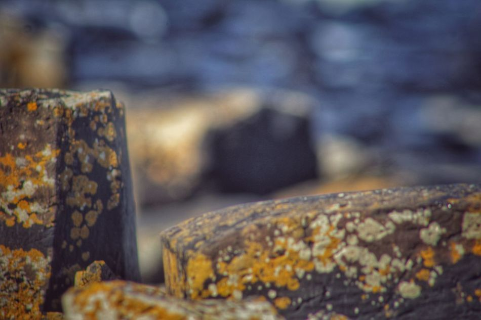 Giants Causeway Northern Ireland World Heritage Natures Magic Strange Rock Formations Natural Phenomenon Famous Landmarks EyeEm Best Shots EyeEm Gallery Exceptional Photographs Nature_collection Our Best Pics EyeEm Best Shots - Nature Seaside Rocks Best Of EyeEm North Coast Of Ireland Atlantic Coast