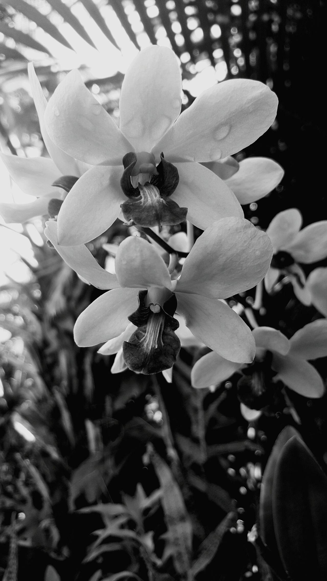 Blackandwhitephotography Kauai Hawaii My Backyard Orchid Close-up