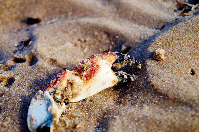 part of a crab Animal Shell Beach Crab Dead Animal Denmark Nature Sand Sony Alpha 58