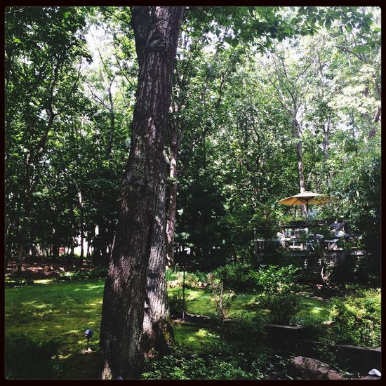 The backyard. Landscaped by Mother Nature. Nature Trees Beautiful Sag Harbor