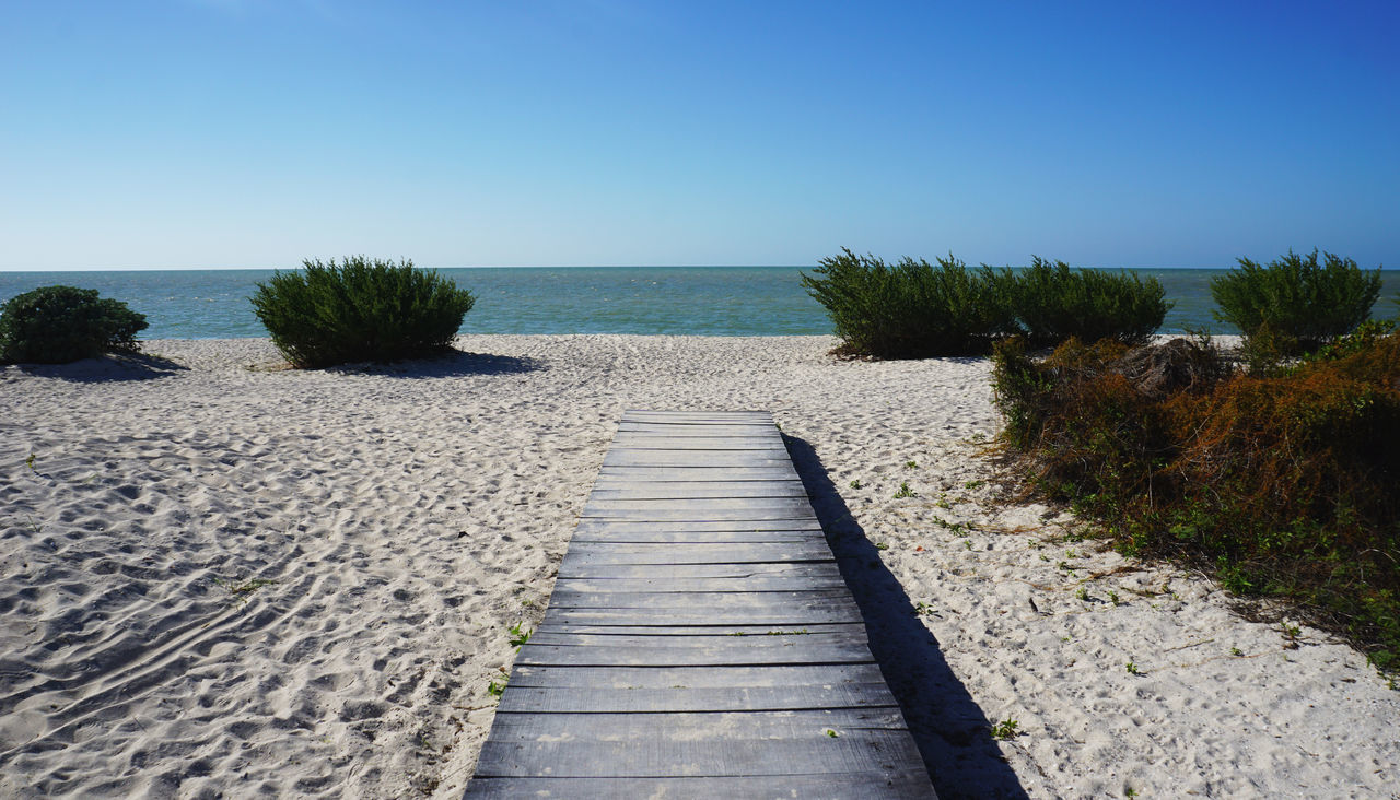 clear sky, sea, nature, tranquil scene, water, the way forward, scenics, day, tranquility, plant, horizon over water, sand, beauty in nature, beach, sunlight, blue, outdoors, sky, no people, tree, growth, grass