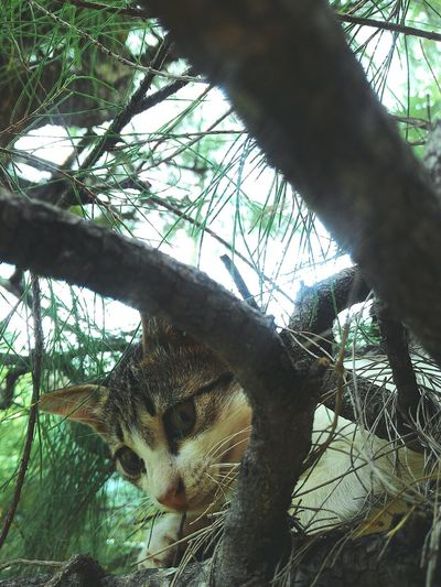 Animal Themes Low Angle View Domestic Animals Green Color Domestic Cat Tree Mammal Outdoors Photooftheday Animals Animal Portrait Animal Head Animal Lover Close-upEyeemphoto EyeEm Gallery hide and seak with my pets😻😹 Pet Portraits