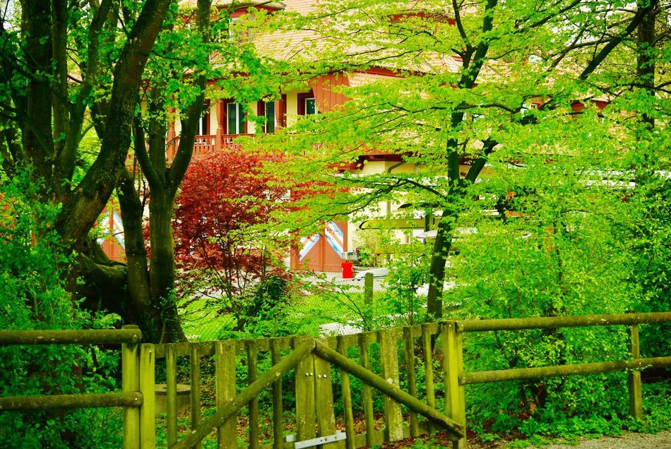 We all love this colours😻 Tree Green Color Nature Growth Outdoors Day Leaf Beauty In Nature