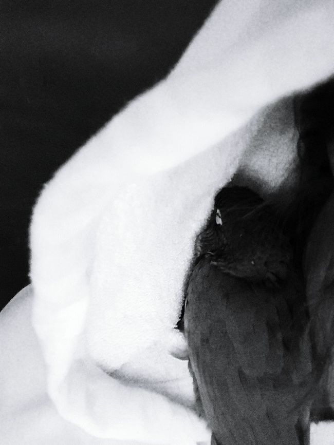 Puffy sleeping in my hood Hanging Out Taking Photos Check This Out Relaxing Enjoying Life Greencheekconure Cute Pets Black And White Photography Pet Life  Pet Lover Cuteness Pets Pets Corner Birds_collection Pet Portrait Pet Photography  Cutepets Bird Photography Blackandwhite Photography Blackandwhitephotography Blacknwhite Black & White Black&white