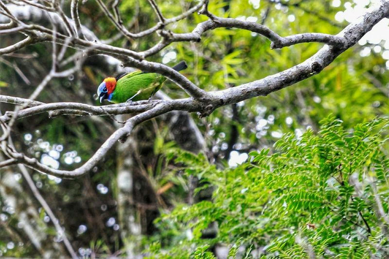 Bird Beautiful Nature Perfection Animals Tijuca's Forest Check This Out Noeffect Photography Colors Nature