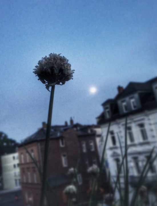 Moon and Schnittlauch