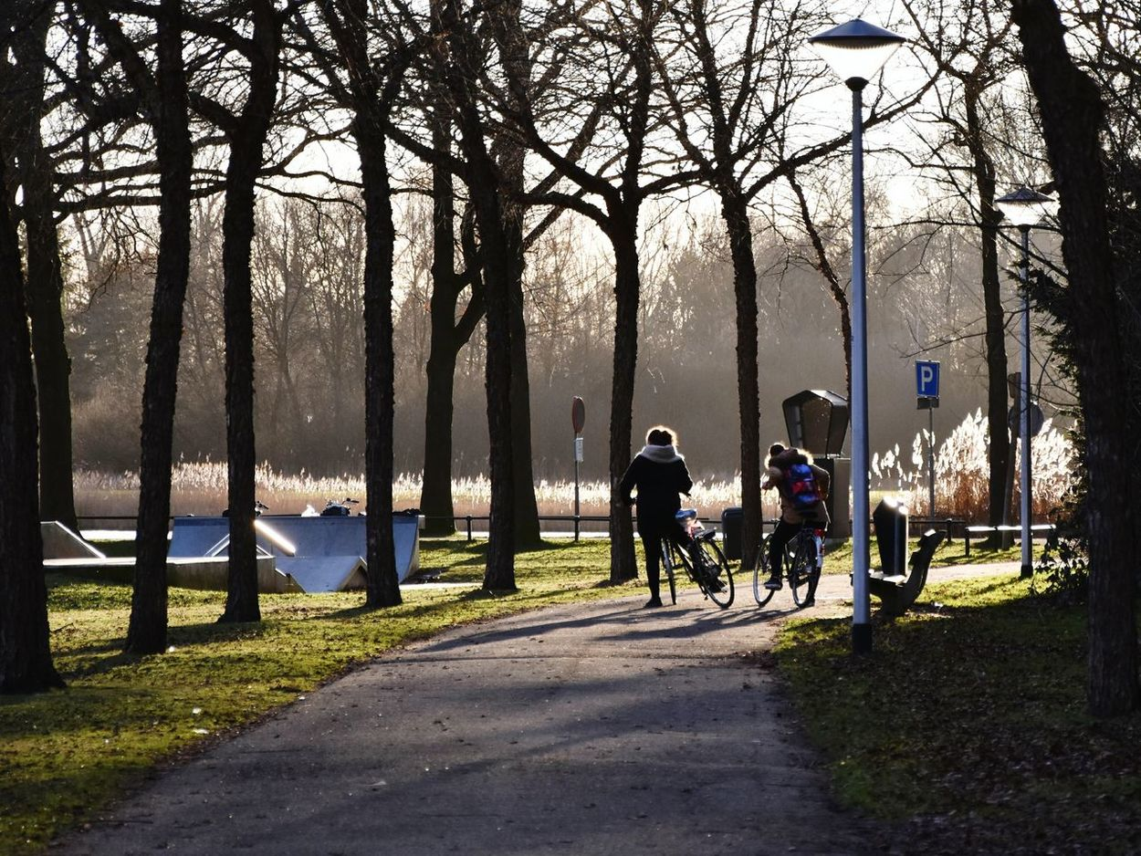 At the park Park Bright Day Low Sun Long Shadows Sunshine Sunlight Outdoors Skate Park Lake Trees Reeds Grass Golden Hour Cyclists Bicycles People Girls Bench Pathway Lampposts Misty Light