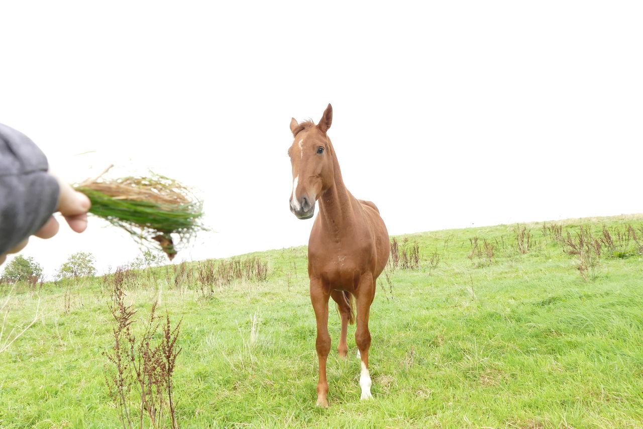 Horse Standing On Grassy Field