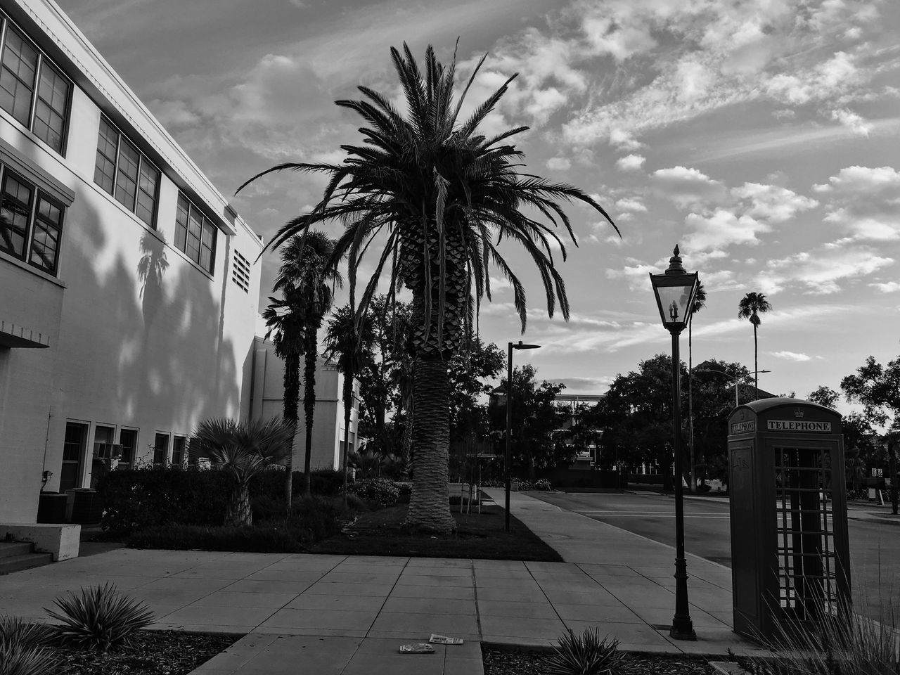 First sunset of 2017 Palm Tree Sunset Black And White Monochrome California Ucdavis