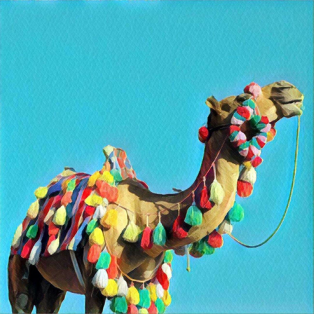 شتر شتر نقش رستم Camel Animal Colorful Prisma Art Naqsh-e Rostam Friday Iran Irantravel Iranian_photography Iranshots ایرانگردی ایران