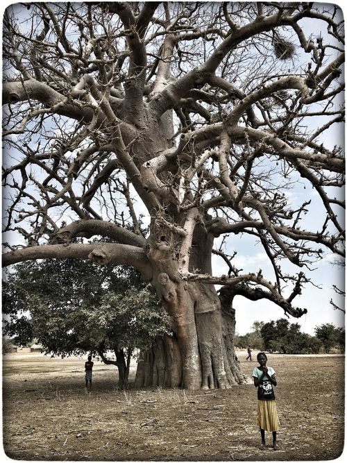 Baobab Tree in Burkina Faso Adult Adults Only Beauty In Nature Branch Day Leisure Activity Lifestyles Men Natur Nature Nature Outdoors People Real People Sky Togetherness Travel Destinations Tree Women