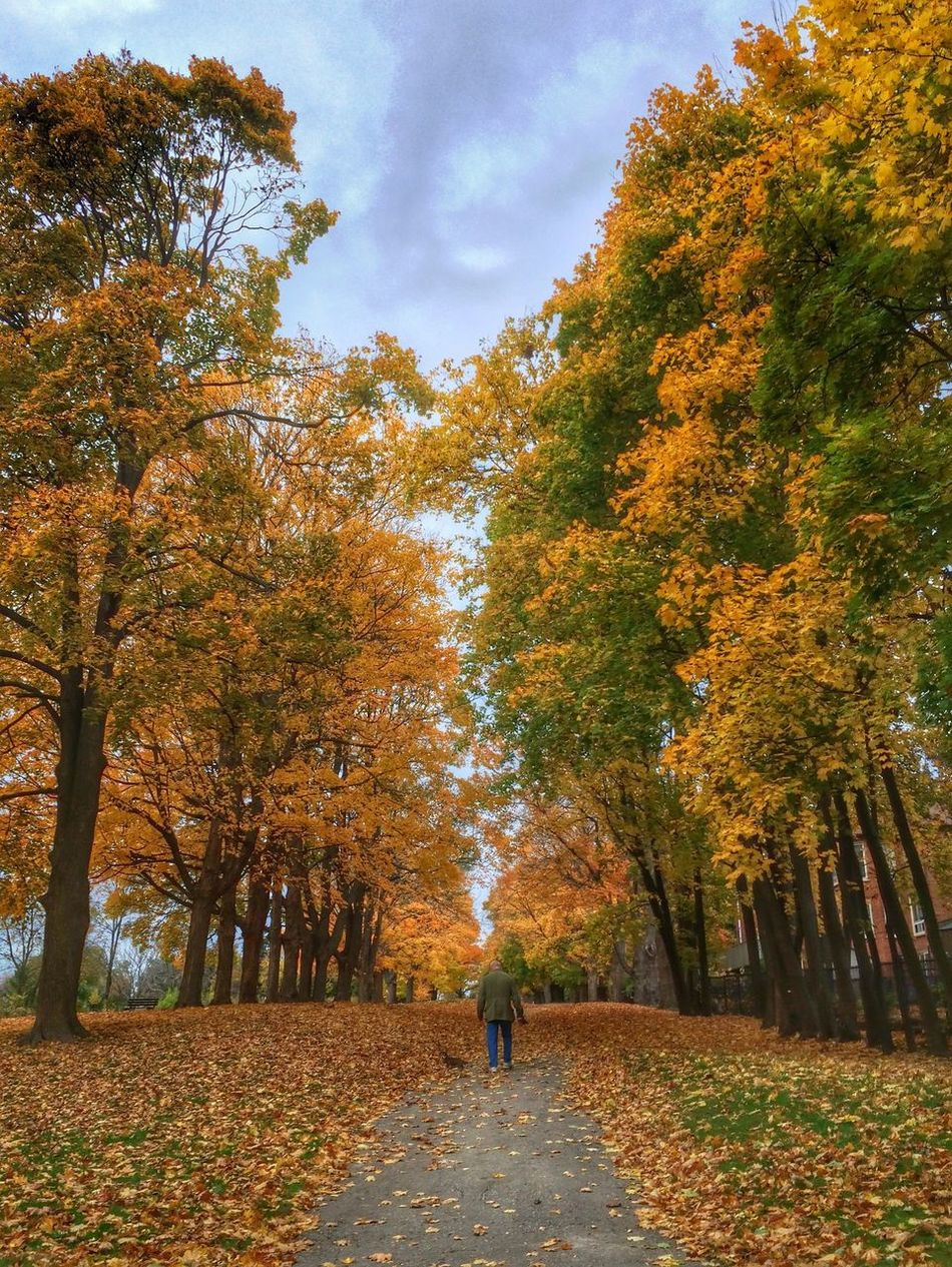 Beautiful stock photos of path, Autumn, Beauty In Nature, Covering, Day