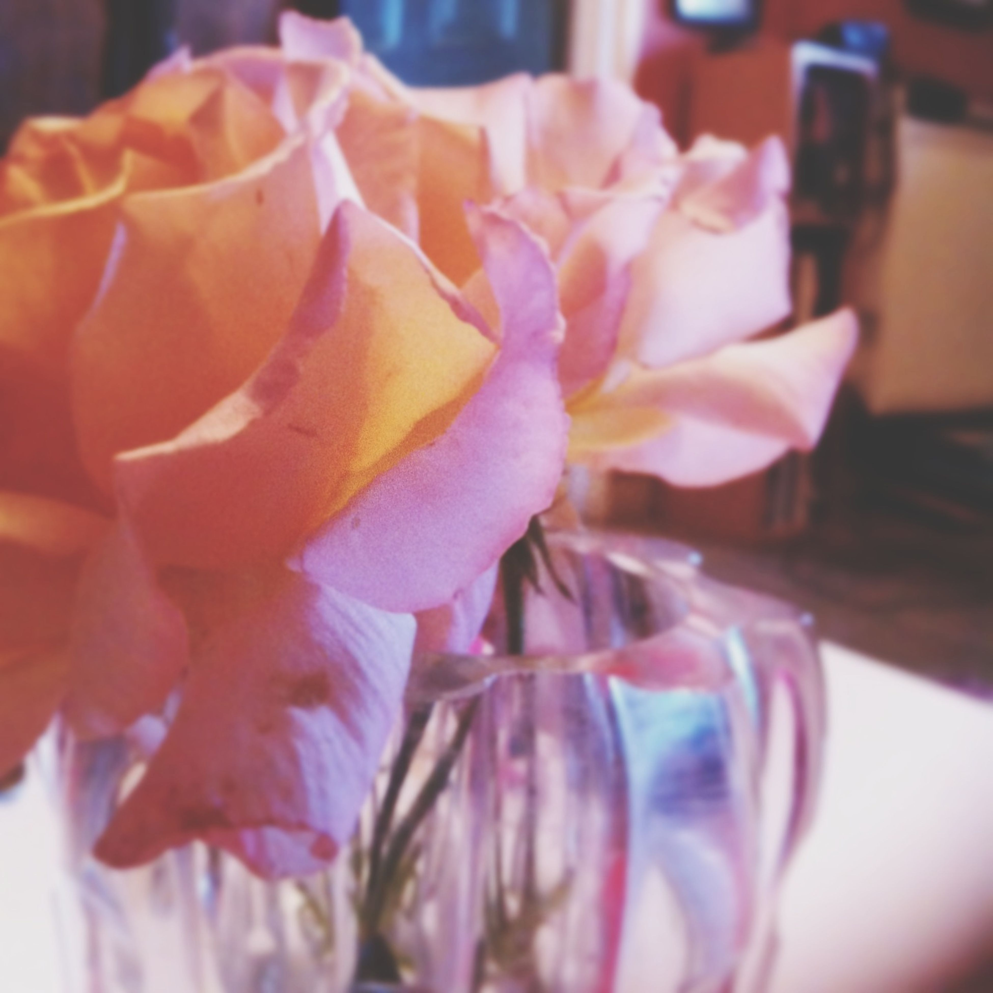 flower, indoors, petal, freshness, close-up, flower head, fragility, pink color, table, focus on foreground, vase, selective focus, still life, no people, home interior, rose - flower, decoration, beauty in nature, nature, pink