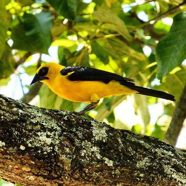 ParqueDelEste Venezuela Caracas Nature Birds Turpial Nature's Diversities