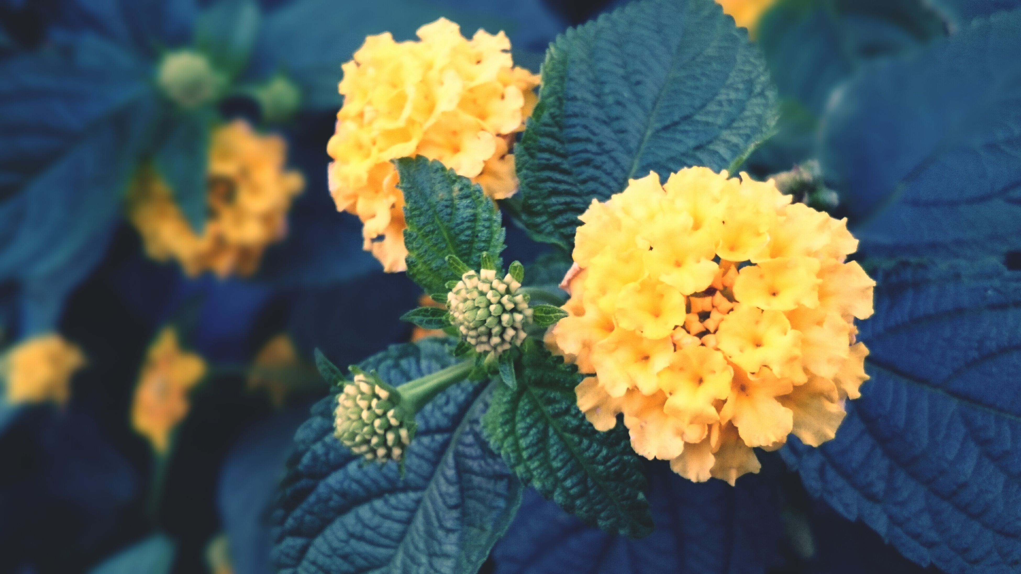 flower, petal, yellow, fragility, freshness, flower head, beauty in nature, growth, close-up, blooming, nature, focus on foreground, plant, in bloom, leaf, outdoors, blossom, day, pollen, high angle view