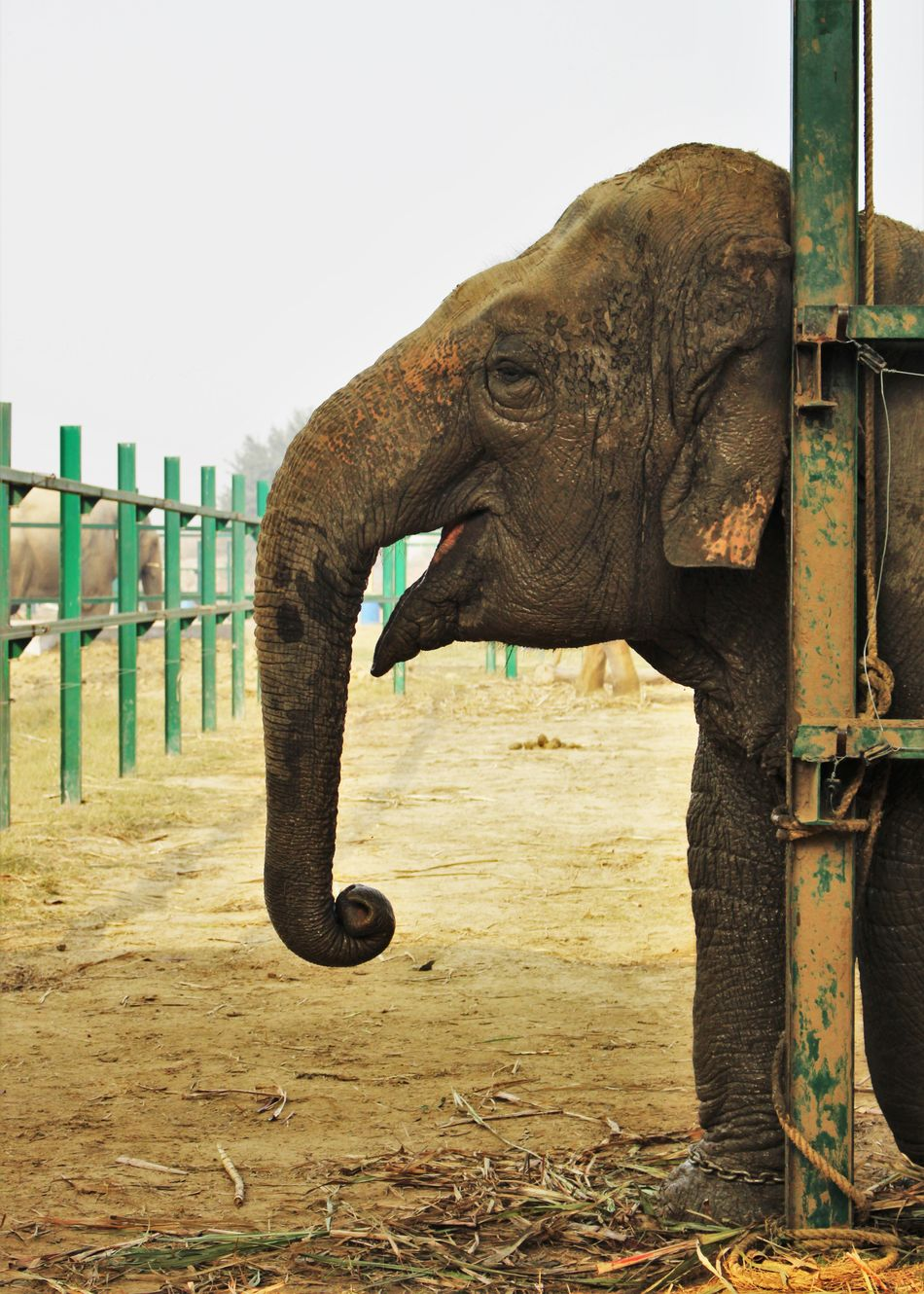 Animal Sanctuary Animal Themes Animal Trunk Day Domestic Animals Elephant India Indian Elephant Mammal Nature No People One Animal Outdoors Rescue Animals Sky