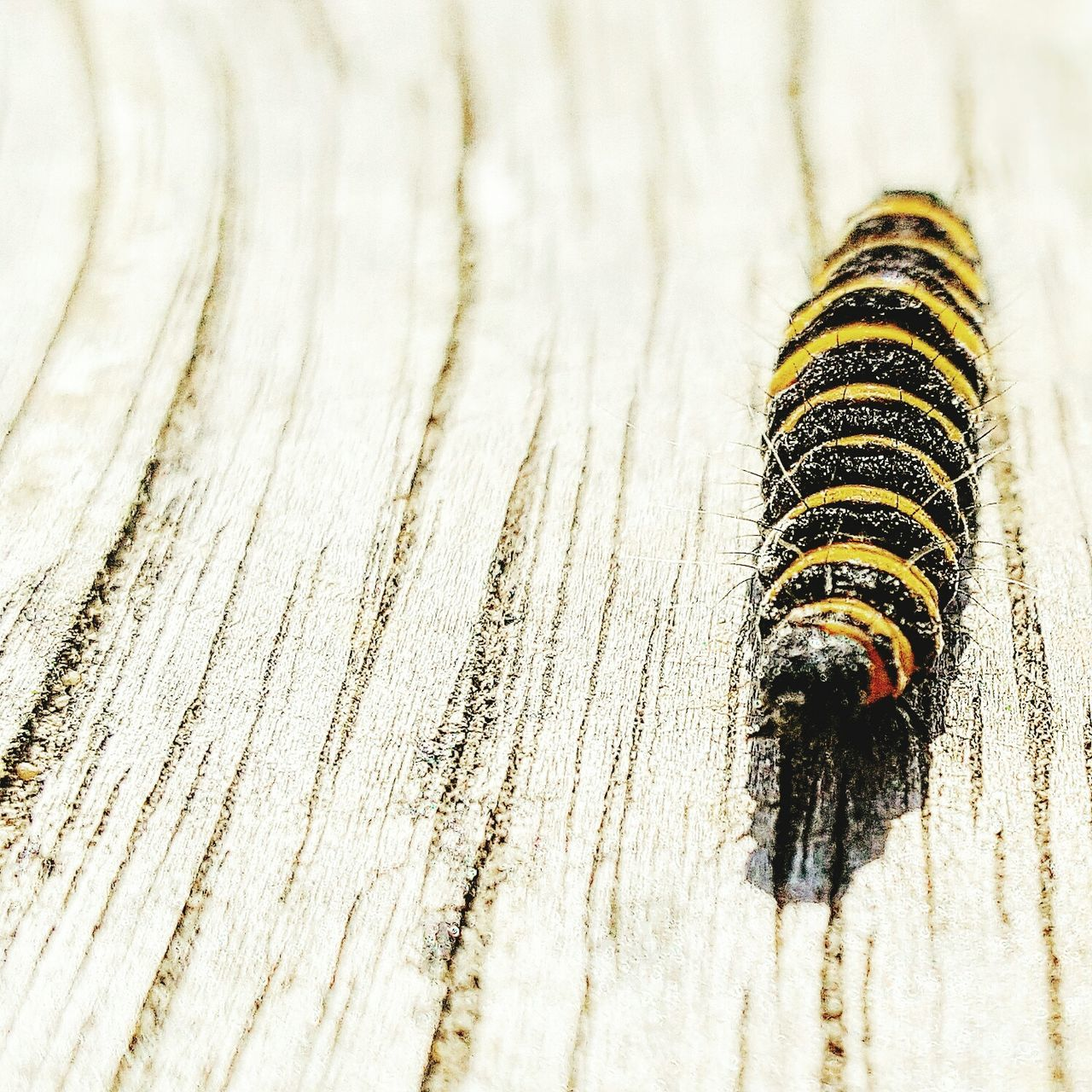 one animal, animal themes, wood - material, insect, close-up, no people, animals in the wild, textured, day, nature, outdoors