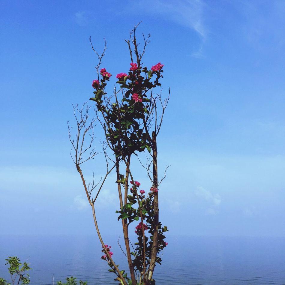 Hanging Out Relaxing Enjoying Life Trees Sunshine ☀ Sky The Week Of Eyeem Tree Lake
