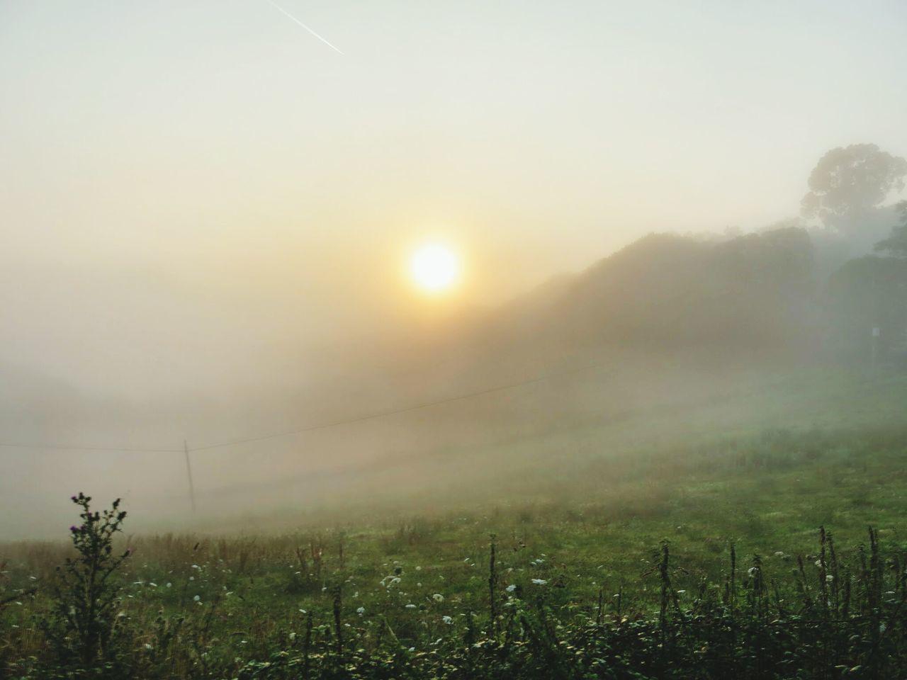 Beautiful stock photos of meadow, Anticipation, Fog, Grass, Hill