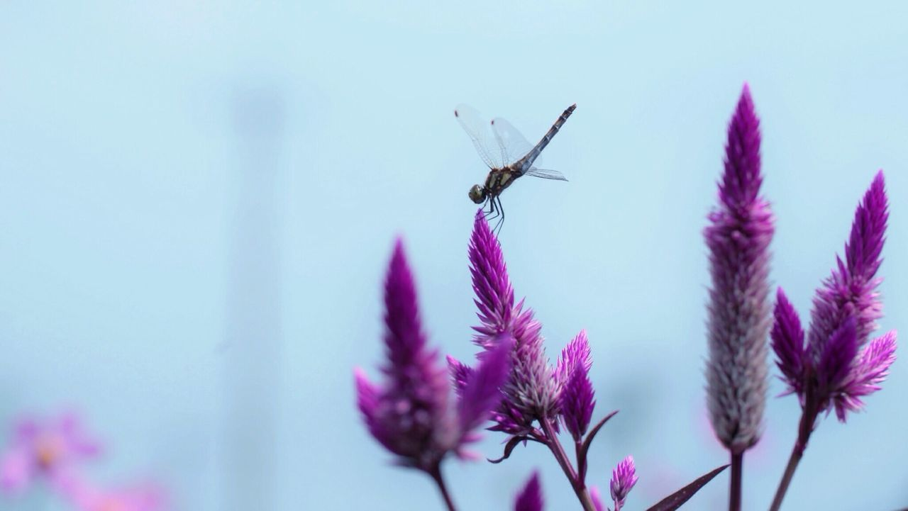 Beautiful stock photos of peace, flower, one animal, insect, animal themes