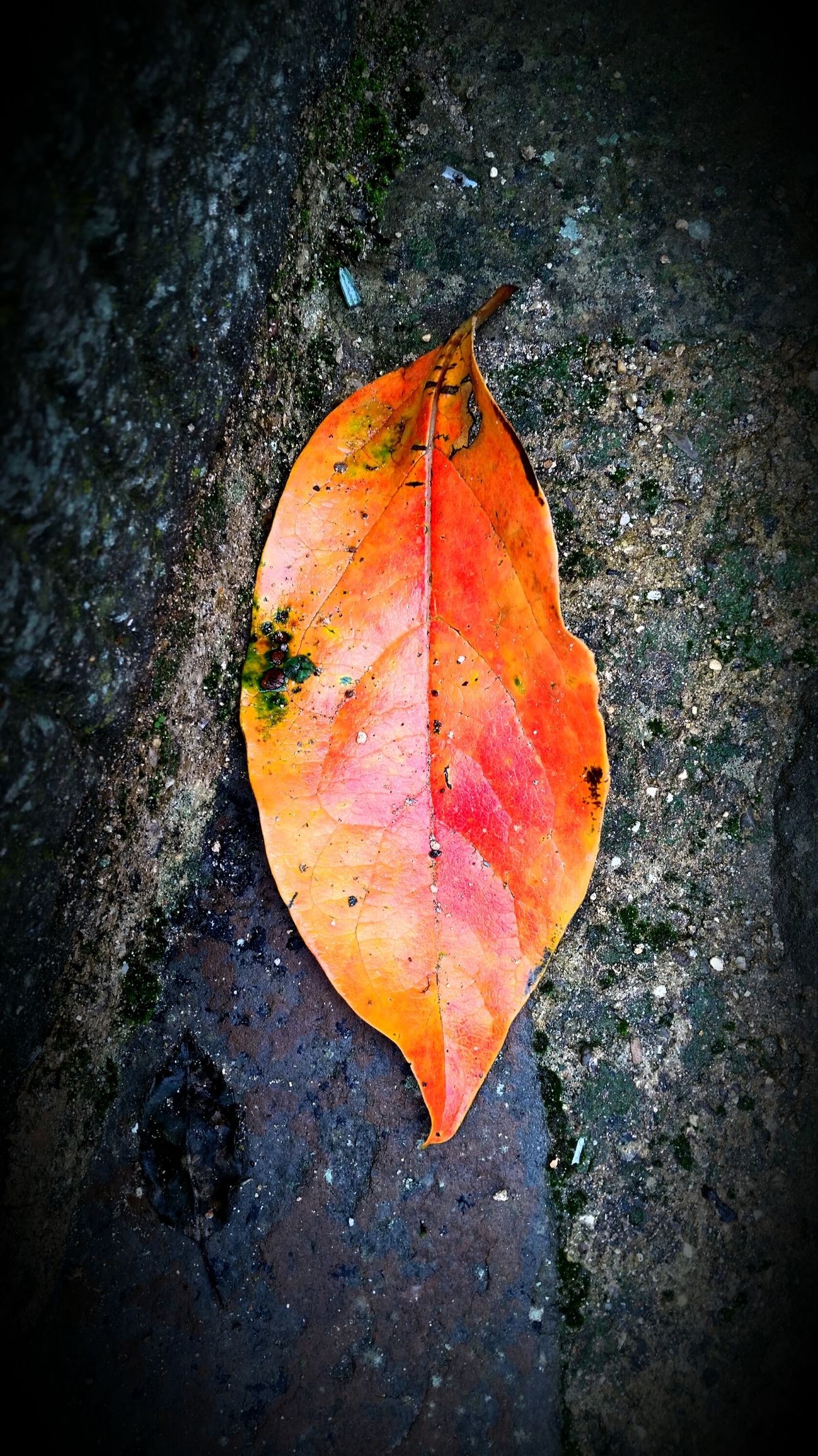 Autumn Colors Autumnleaves Colors Of Autumn Autumn