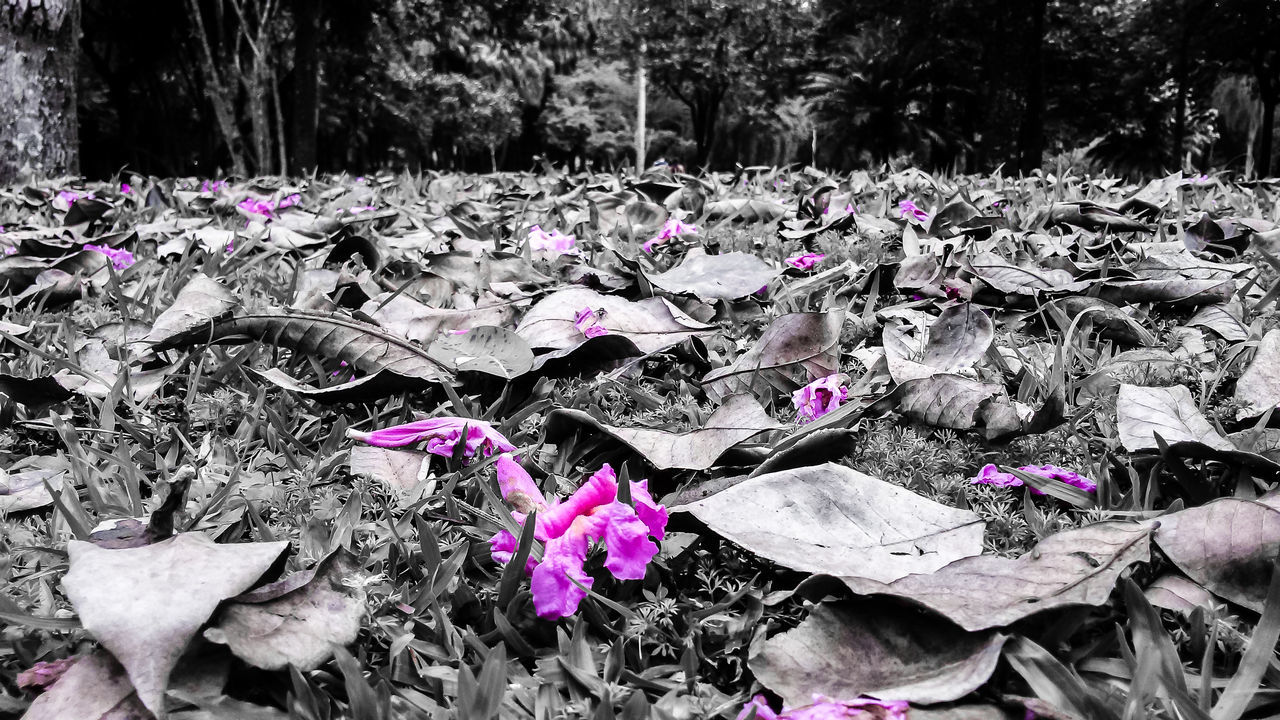 Ibirapuera Park. See more pics: 500p Beauty In Nature Black And White Colors Day Flower Fragility Growth Nature No People Outdoors Park Photo Photographer Photography Photooftheday Plant Tree Water