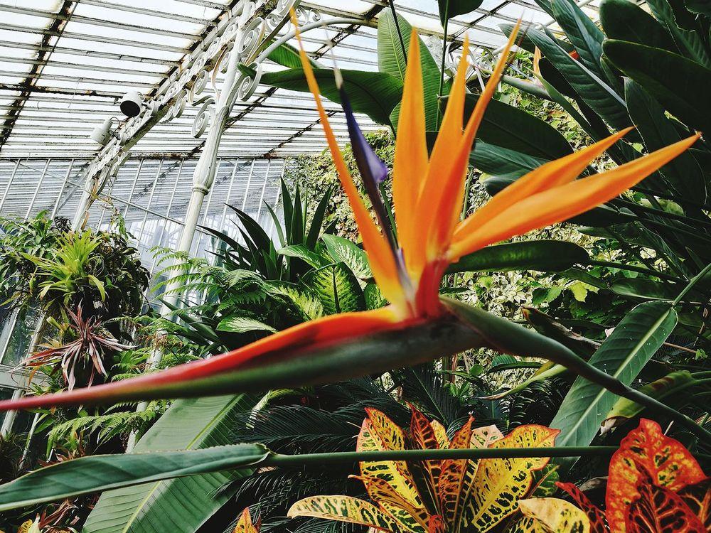 Birdofparadise Flower Spiked Beauty In Nature Nature