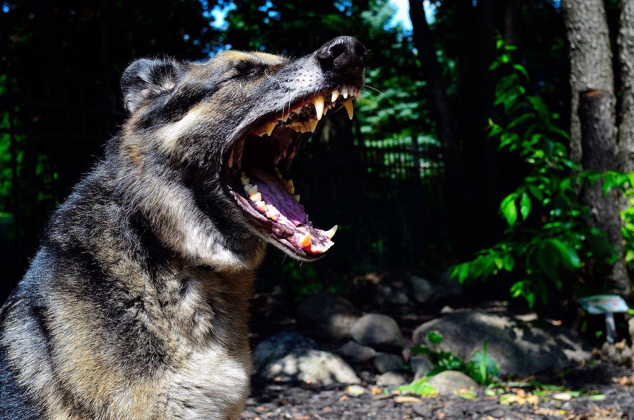 Beautiful stock photos of wolf, Animal Mouth, Animal Teeth, Animal Themes, Day