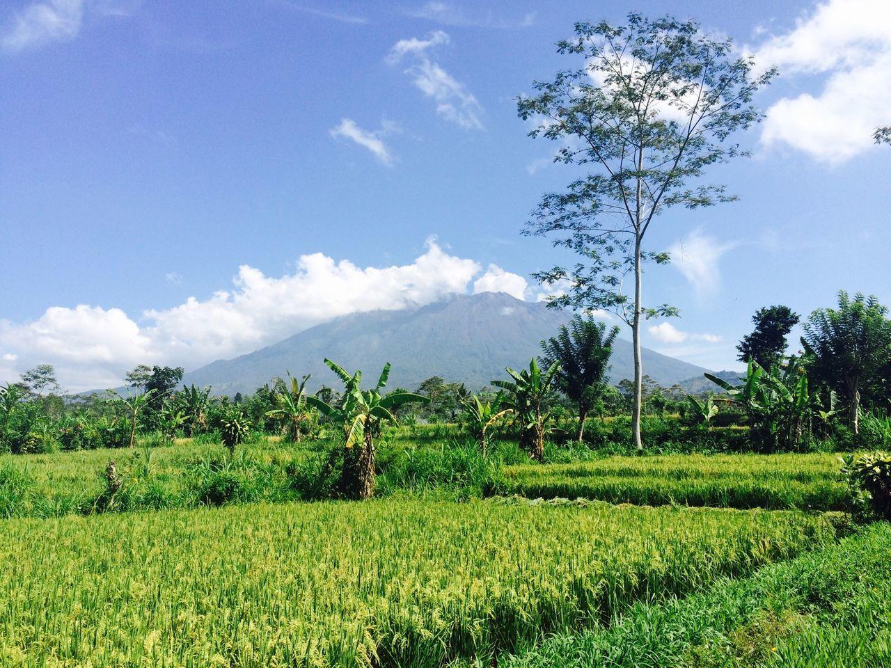 Karangasem Bali sosialisasi peta zonasi bencana alam Digital Imaging Geospasial