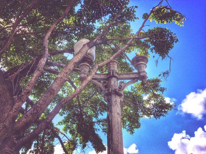 Tree Lamp Sky