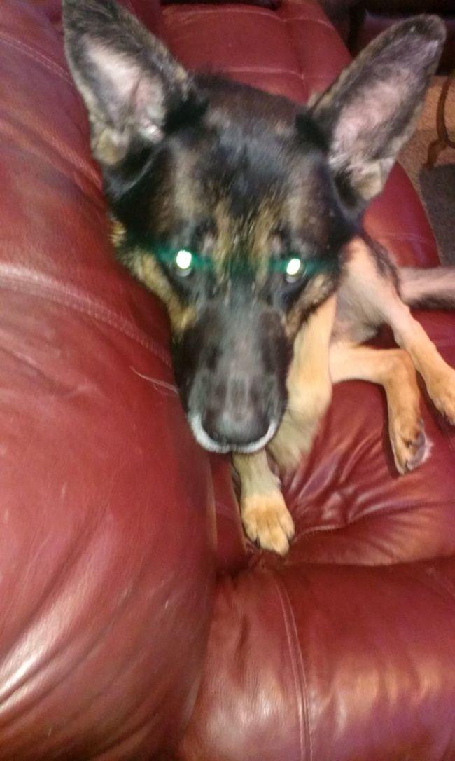 my dog Taz