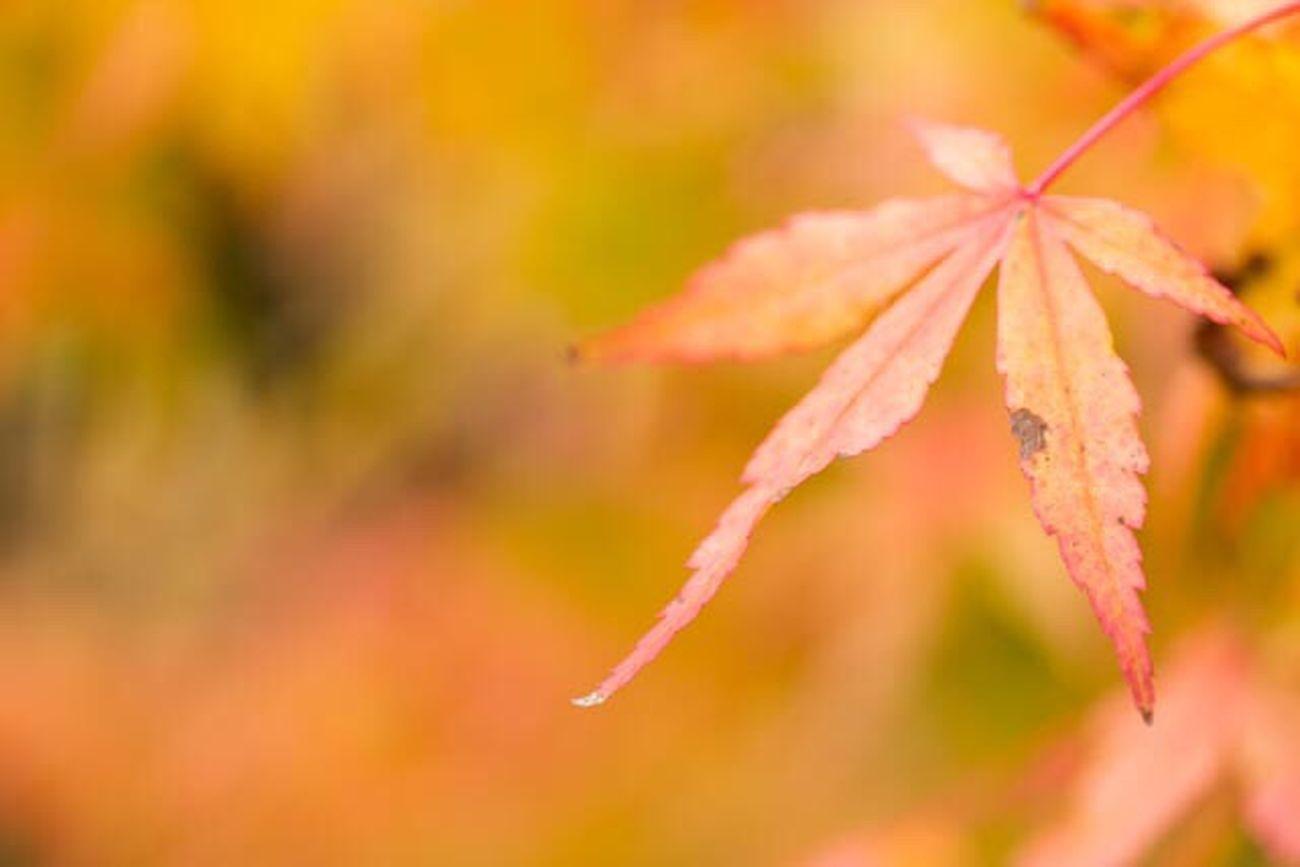 Nature Autumn Leaf Plant Beauty In Nature Orange Fall Fall Beauty Fall Colors Fall Leaves