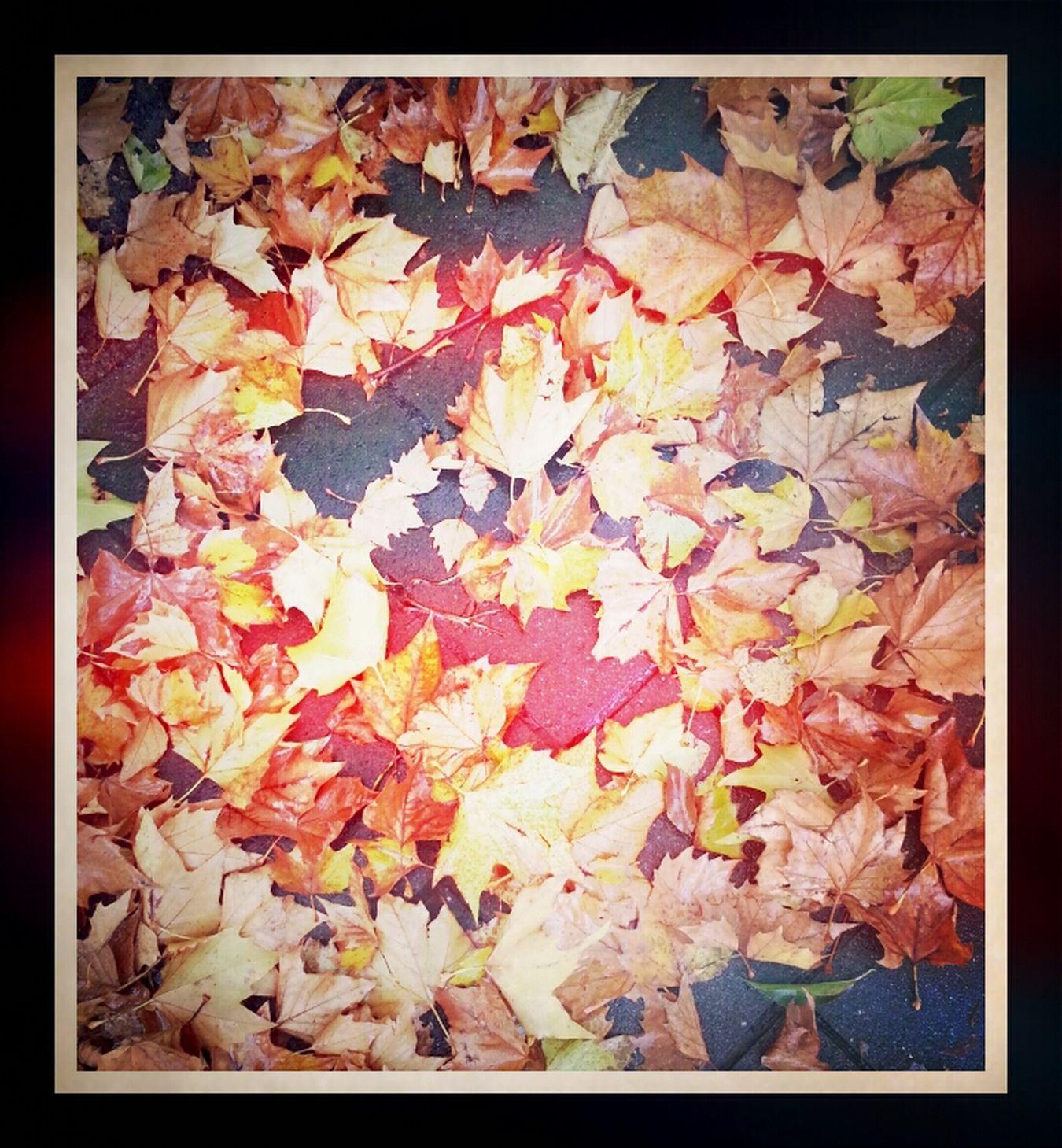 Herfst...?