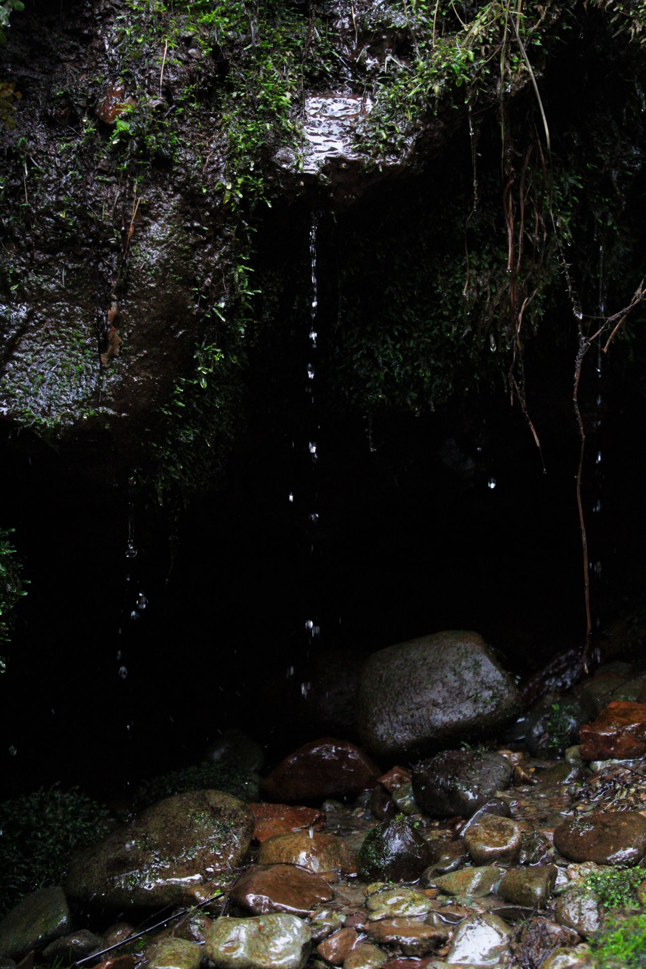 Water Water Flowing Over Rocks Washington Washington State Water Flowing Down Speed Relaxing View Water Flow Canonphotography Moss Lostplace Motion Green Color Mossy No People Drip Dripping Dripping Water Fast Shutter Speed Pebbles Dark Darkness Forest Forest Photography Relaxing